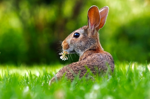 Zelený jíst nebudu, nejsem přece králík!