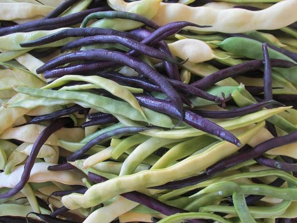 Zelené fazolky – zdravé pro děti i pro maminky