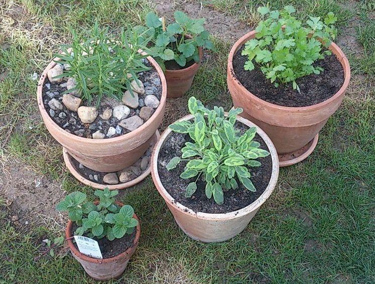 Jak pěstovat bylinky v truhlících?
